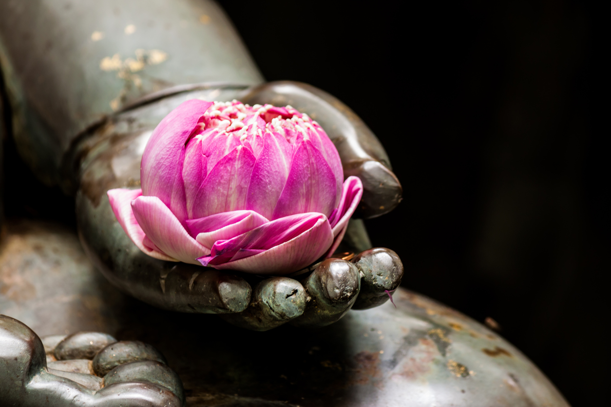 A pink lotus flower in the hand of a buddha statue figura wellness a pink lotus flower in the hand of a buddha statue izmirmasajfo